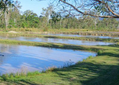 AquaVerde Farm pond